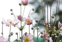 Tuin vaste planten