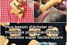 confiserie pour chien