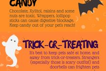 Keep your pets safe and healthy