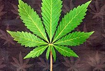 Cannabis Books UK / A Board that is dedicated to Cannabis Books that can be found in the United Kingdon