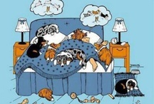 Funny Dog Stuff! / Funny dog related quotes and cartoons.