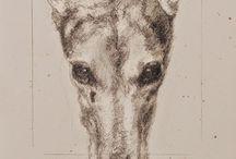 Állat illusztráció