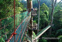 Malaysia - Sabah Borneo