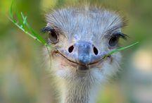 Cute Animals / by Lori Herndon