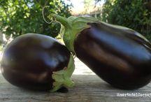 Cómo plantar y cultivar berenjenas / La berenjena tiene poderosas propiedades curativas, antibacterianas y antivirales. Aquí veremos como cultivarlas