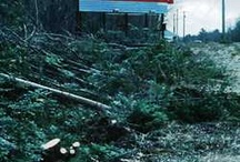 Billboards and Trees / Tree preservation, especially on public roads. Prevent cutting trees for billboard visibility.