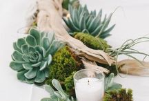Cactus styling