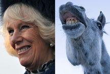 Animals Smile