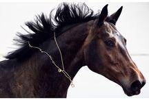 Pony luxury