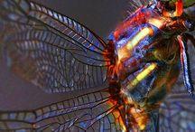 陸の生き物 虫・昆虫