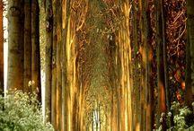 Träd och alléer