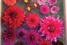 * #Blumen→ - #Schöpfung-#Gott 'es  ~ #Flowers→ - #God 's - #Creation ~ / #Blumen - #Schöpfung - #Gott 'es - #Bäume - #Schöpfung - #Gott 'es -   #Flowers - #God 's - #Creation - #Trees - #God 's - #Creation