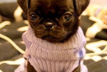 Pug outfits  / Adorable pugs
