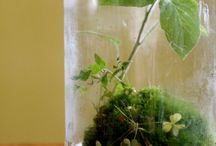 terrariums / by Kelly Gustafson