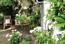Urban jungle garden