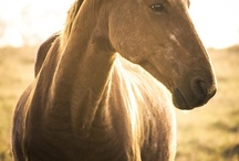 Beautiful Horses / A collection of horses that I find beautiful!