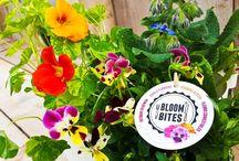 BloomBites Potplanten
