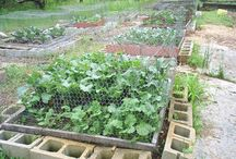 1_Square Foot Gardening & Preserving / by Amy Hoogstad