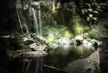 Forests Enchanted