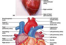 anatomie...fiziologie