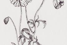 Our Florals