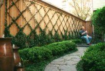 High Vibe Garden