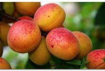 косточковые(вишня,черешня,абрикос,слива)