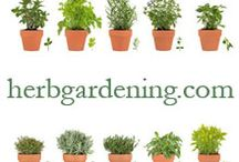 Herbs and Herbalism / Everything about herbs