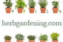 Herbs / Growing herbs