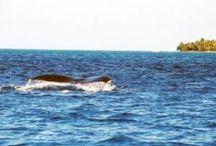 Baleine Guadeloupe