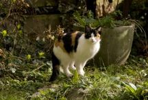 tips to keep animals out of the garden