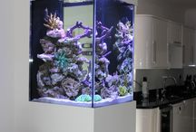 Bespoke marine aquarium in Sidcup / Aquatic Gems Ltd designed and installed this beautiful marine aquarium in a home in Sidcup