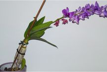 Orchids / Orchids I have or I used to have