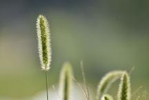Plant-植物-
