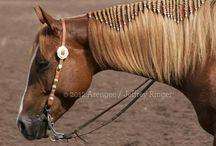 Paarden haar stylen
