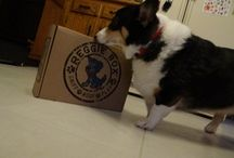 AKC Product Reviews / Adorable photos and videos of adorable dogs loving some of our favorite AKC products.