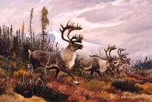 deer paintings