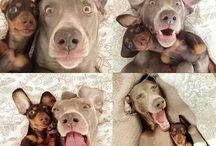 Selfies of the animal Kingdom