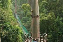 Great Bridge :)
