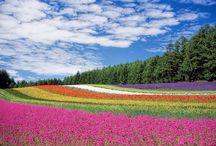 Garden and nature / Garden