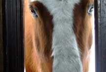 All Things Equine / by Diane Rodgers