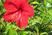 Florida Flowers / Florida Flowers