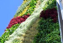 Green Facades / The best green facades created in buildings for Paisajismo Urbano