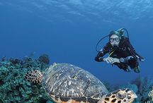 You are an avid diver / Discover the underwater beauty of the Guadeloupe Islands. Be Mesmerized by the deep wonders of Sec Pâté in Les Saintes, or the lush sponges off Pigeon Islands in the Cousteau Reserve in Basse-Terre or the vibrant, colorful reefs of Marie-Galante. Cousteau knew a good thing when he saw it.