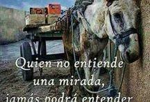 mi mejor amigo / NO AL #MALTRATO #ANIMAL