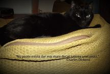 """Maya, my black cat / Especially to a wonderful beings who enriched my all life and that was unique in she's way: she """"chirpes"""", she kneaded, she pushed me with head , she """"stamped"""" all over my shoes. I tried to give her all the comfort in the world, I offered her all of my love. I wish the world to be able to turn on and everyone can provide a good place for our speachless friends.  Sleep smoothly, my little olive"""