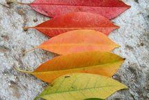 Autumn <3 colours