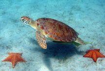 sea turtles ♡