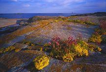 Suomen Etelärannikko