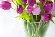 DaphneRosa in Bloom... April - Tulip